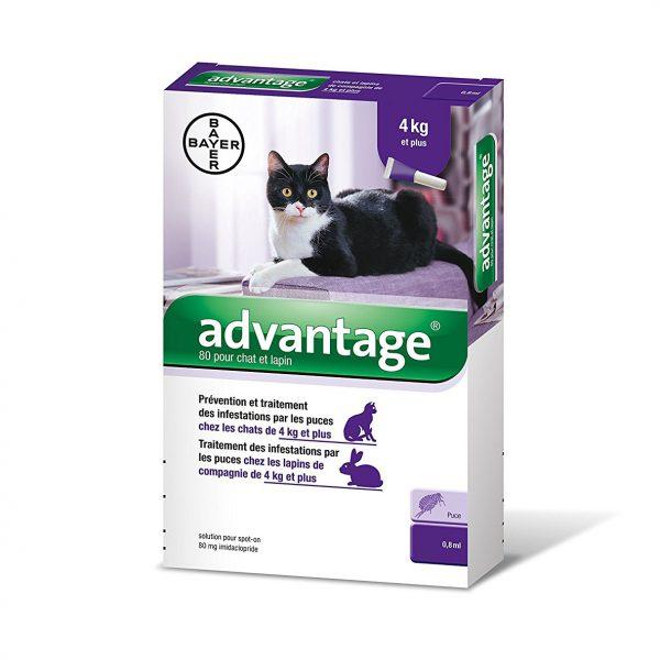 Cat'Étoiles - Traitement antipuces Advantage chats