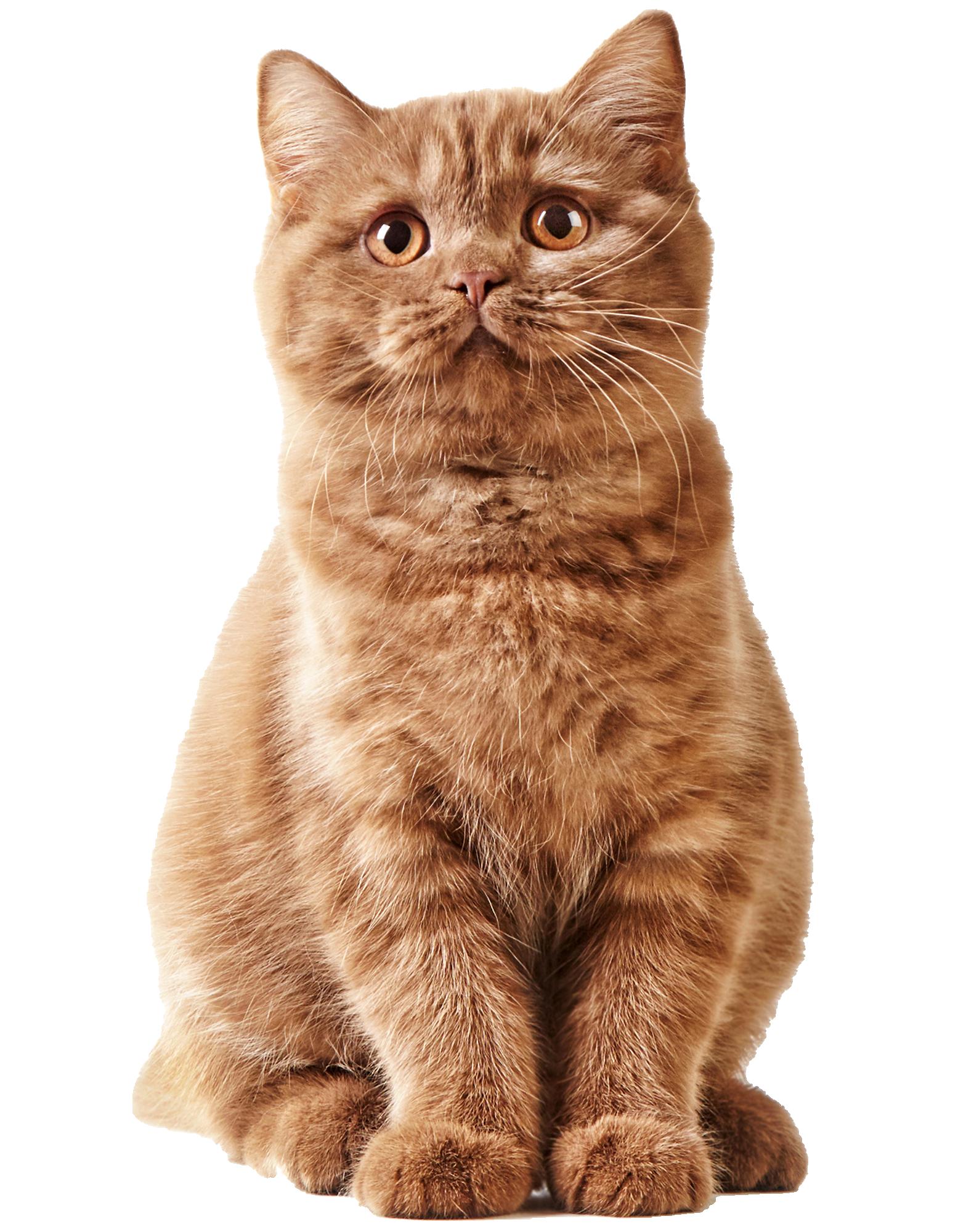 Cat'Étoiles - Accueil